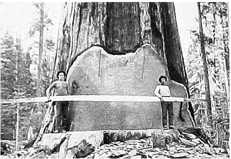 big saw